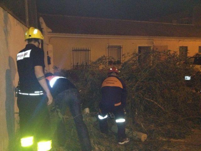 Protección Civil retira un árbol del CEIP Santiago, Foto 1