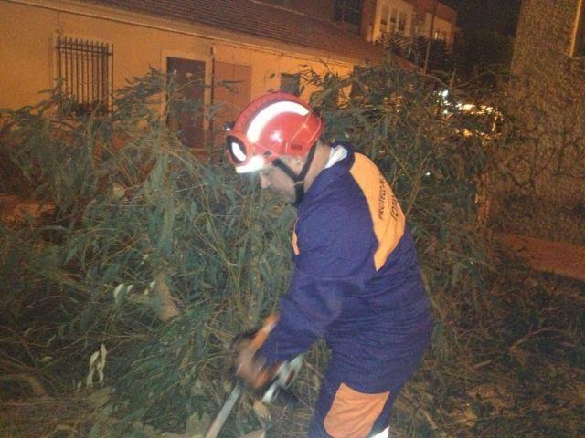 Protección Civil retira un árbol del CEIP Santiago, Foto 2