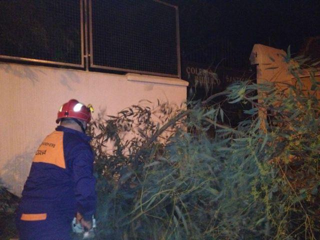 Protección Civil retira un árbol del CEIP Santiago, Foto 3