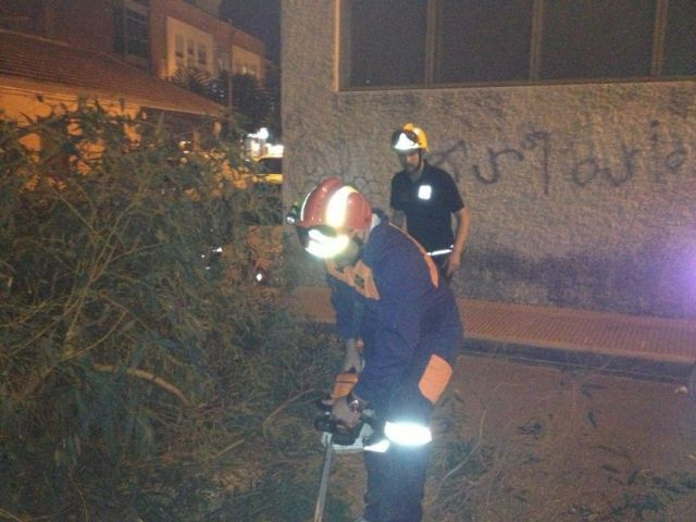 Protección Civil retira un árbol del CEIP Santiago, Foto 4