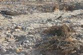 La CHS estudia los daños producidos en el término municipal de Totana por el temporal del lluvias torrenciales - 10