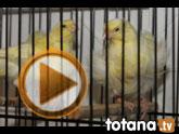 Exposición Ornitológica Ciudad de Totana 2012
