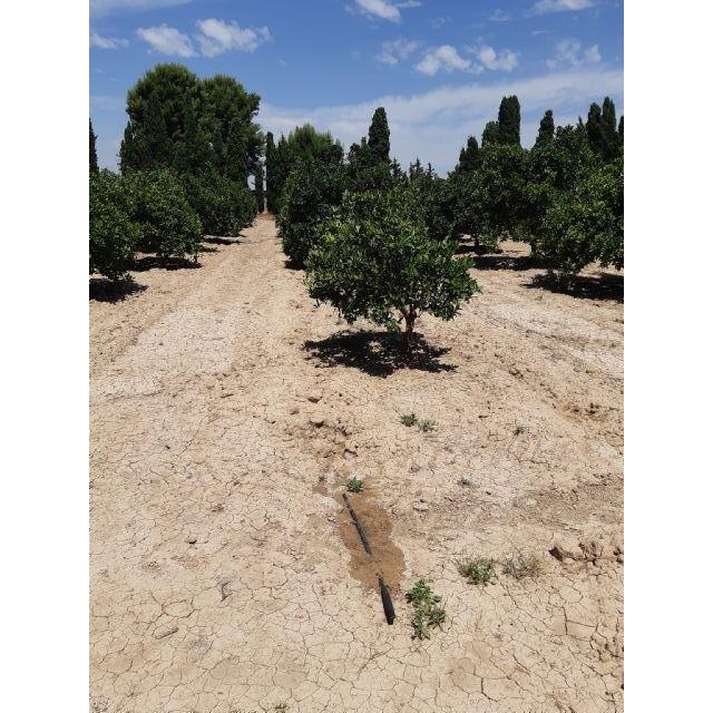 Agricultura fomenta el riego subterráneo en cítricos para el cumplimiento de la Ley de recuperación y protección del Mar Menor - 1, Foto 1