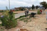 El ayuntamiento y ACOMA replantan los pinos utilizados en Navidad
