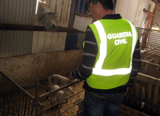 La Guardia Civil detiene a dos personas por sustraer más de medio centenar de corderos de una granja de Totana, Foto 3
