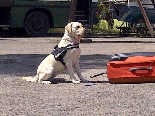 Un cabo de la Unidad Canina de la Policía Local de Totana participa como monitor en el I Curso de Guías Caninos de Perros Detectores de Drogas, Foto 3