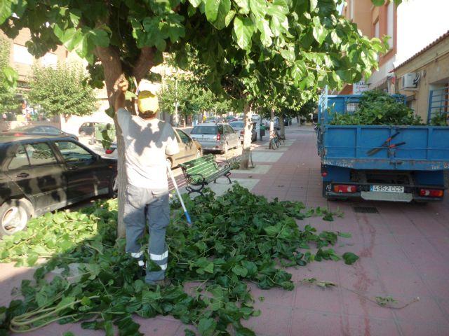 Realizan labores de acondicionamiento del arbolado en las principales avenidas y calles de Totana, Foto 1