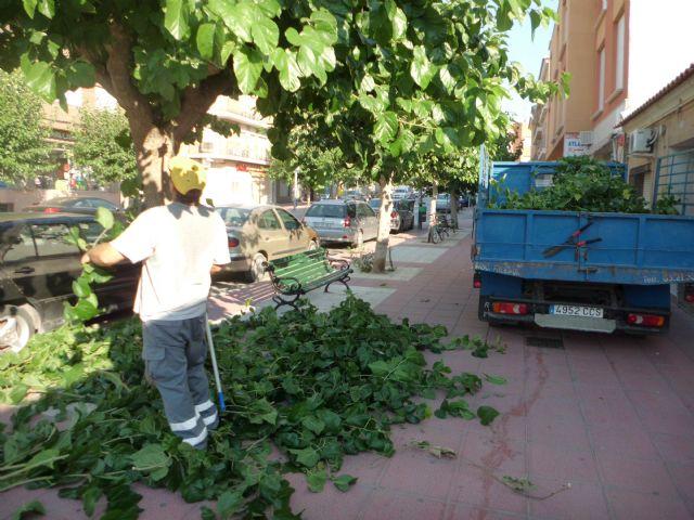 Realizan labores de acondicionamiento del arbolado en las principales avenidas y calles de Totana, Foto 2