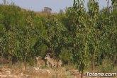 Agricultores, propietarios y vecinos de Sierra Espuña exigen al consejero de Medio Ambiente la desaparición del arruí