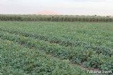 Denuncian que el PP multa por regar cultivos de más de 100 años