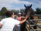 PADISITO visita un centro de terapias ecuestres en Alhama de Murcia - 1