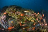 El Open Internacional de Fotografía Submarina finaliza con bellas instantáneas de los fondos marinos de la Bahía de Mazarrón - Foto 1