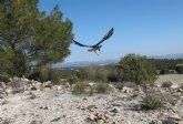 Los espacios naturales protegidos se unen para celebrar el D�a Mundial de las Aves