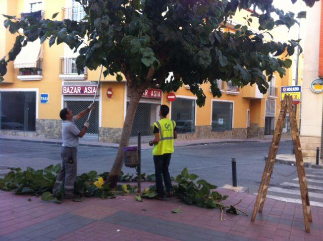 Comienzan los trabajos de poda las moreras en las vías públicas y parques y jardines de Totana dentro de la campaña de otoño, Foto 1