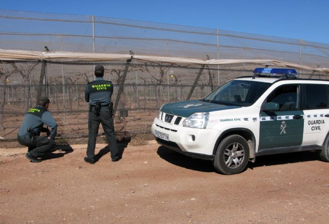 The Civil Guard dismantled a criminal group dedicated to the removal of fruit in Totana, Foto 1