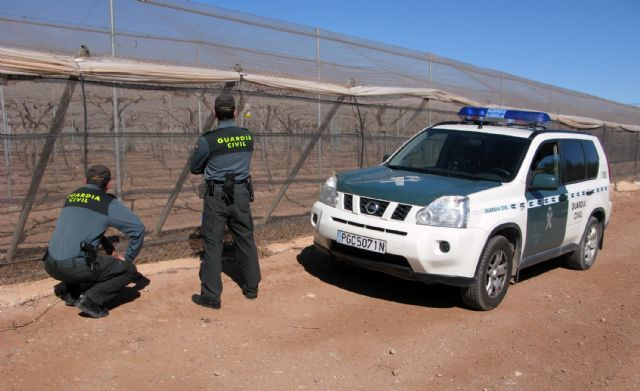 The Civil Guard dismantled a criminal group dedicated to the removal of fruit in Totana, Foto 3