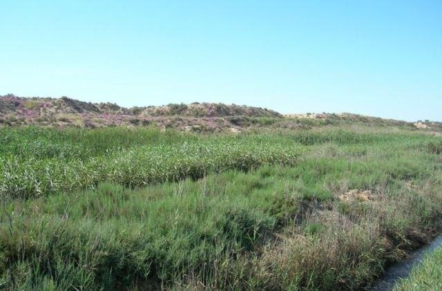 Más de 1.000 plantas restauran el paisaje protegido de Saladares del Guadalentín