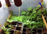 Desmantelada un sofisticado invernadero de marihuana en una vivienda de Mazarrón