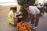 La concejalía de Servicios coloca plantas y sencillos adornos florales con motivo de las Fiestas de Santiago
