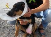 La Guardia Civil imputa a un septuagenario por colocar cepos que causaron lesiones a dos perros de su vecina
