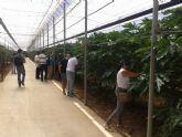Agricultores mazarroneros muestran su interés por el cultivo de frutos tropicales