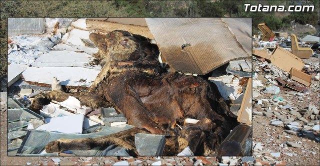 Las escombreras ilegales son un ejemplo más de la desidia del Partido Popular de Totana, Foto 1