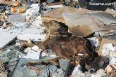Las escombreras ilegales son un ejemplo más de la desidia del Partido Popular de Totana - 9