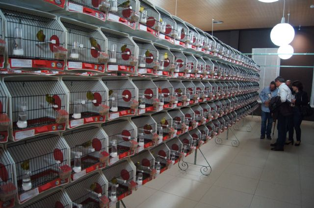 Más de 2000 ejemplares participan en el II Concurso Ornitológico Regional Murciano que se celebra este fin de semana en Totana, Foto 1