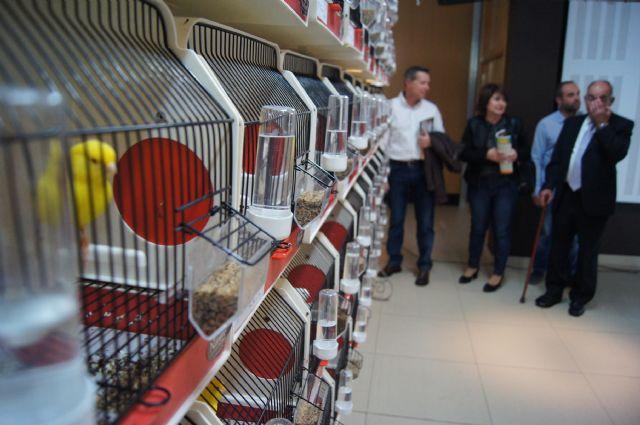 Más de 2000 ejemplares participan en el II Concurso Ornitológico Regional Murciano que se celebra este fin de semana en Totana, Foto 2