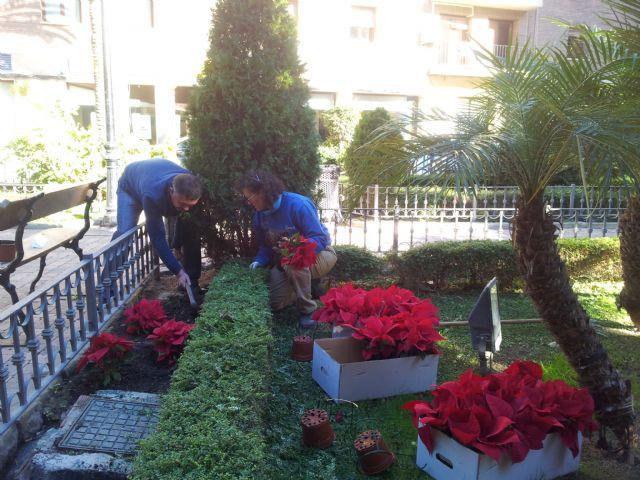 Lorca un millar de ejemplares de plantas y flores for Ornamentacion para navidad