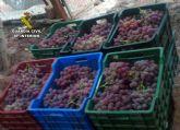 La Guardia Civil detiene a 25 personas por la sustracción de uva de mesa en fincas de la Región