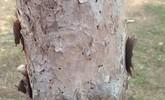 Desarrollan actuaciones de prevenci�n y control sanitario en las masas forestales afectadas por la sequ�a