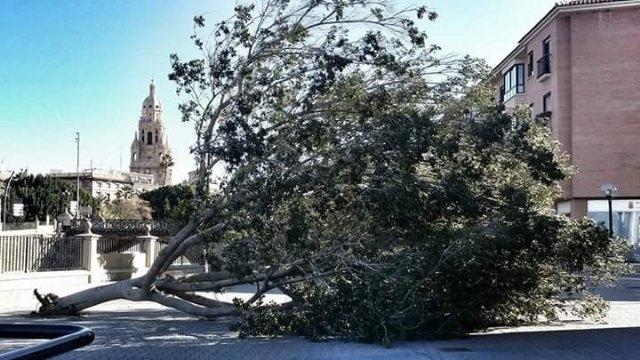 El 1-1-2 ha gestionado hoy 44 incidentes relacionados con el viento en la Región de Murcia, Foto 1