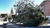 El 1-1-2 ha gestionado hoy 44 incidentes relacionados con el viento en la Región de Murcia