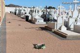 El enterrador de Totana hace un llamamiento a los propietarios de las fosas para que revisen las mismas tras el episodio de vientos - 8