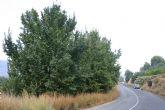 La mejora de carretera Alhama-Pliego, un proyecto en marcha