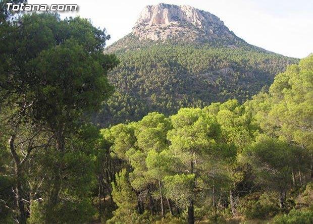 Medio Ambiente publica una orden para garantizar que el uso de los montes de utilidad pública sea compatible con la conservación, Foto 1
