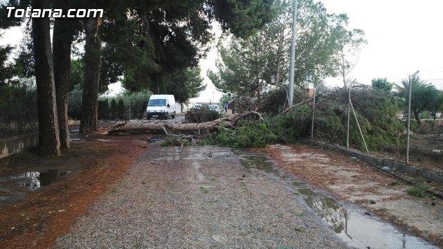Bomberos intervienen para retirar una rama de un árbol de grandes dimensiones, que estaba cortando una carretera, Foto 1