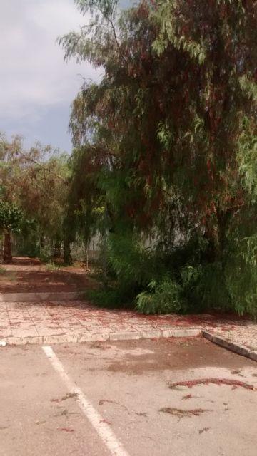 El PP denuncia el estado de abandono de los jardines y falta de limpieza general que sufre el Polígono Industrial de Totana, Foto 3