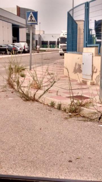 El PP denuncia el estado de abandono de los jardines y falta de limpieza general que sufre el Polígono Industrial de Totana, Foto 8