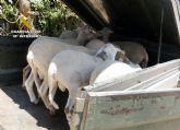 Los Equipos ROCA de la Guardia Civil han arrestado a más de 800 personas por robos en fincas y granjas de la Región - 3