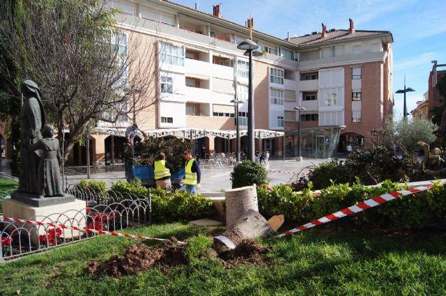 Cae un ficus de grandes dimensiones en un parterre de la plaza Balsa Vieja por el efecto del temporal de viento sin que se produzcan daños, Foto 5