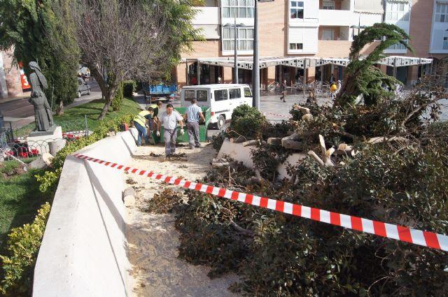 Cae un ficus de grandes dimensiones en un parterre de la plaza Balsa Vieja por el efecto del temporal de viento sin que se produzcan daños, Foto 8