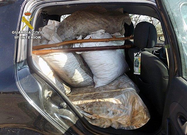 La Guardia Civil recupera más de trescientos kilos de aceituna sustraídos en una explotación agrícola de Lébor, Foto 2