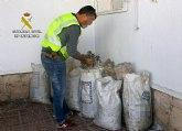 La Guardia Civil recupera más de trescientos kilos de aceituna sustraídos en una explotación agrícola de Lébor
