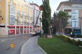 Podan los árboles de grandes dimensiones y mayor altura de los parterres de la plaza Balsa Vieja por seguridad