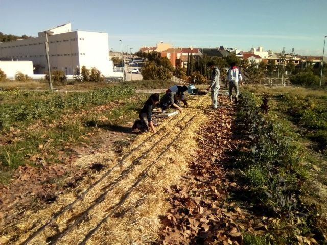 An urban garden in Totana, Foto 3