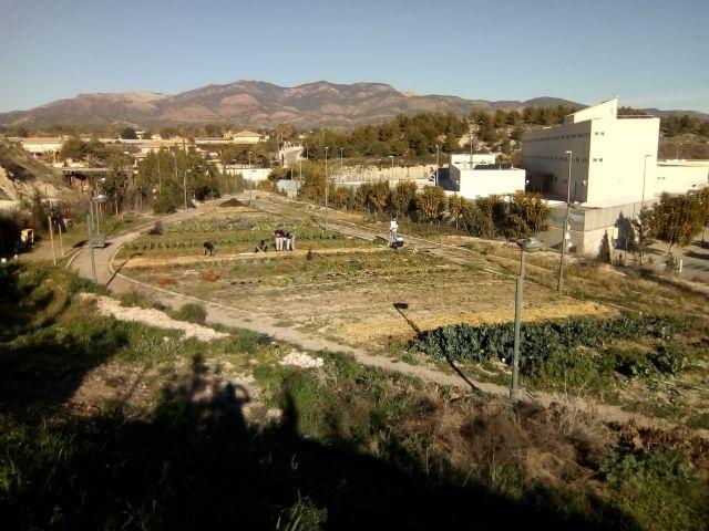 An urban garden in Totana, Foto 4