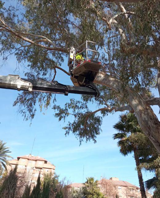 El Ayuntamiento revisa con detalle los eucaliptos de más de 20 metros del jardín de La Seda garantizando la seguridad de los vecinos - 1, Foto 1