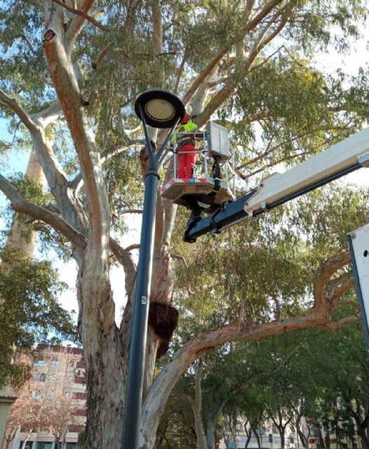 El Ayuntamiento revisa con detalle los eucaliptos de más de 20 metros del jardín de La Seda garantizando la seguridad de los vecinos - 2, Foto 2